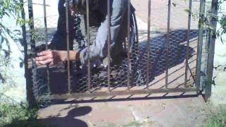 Wheelchair Style - Adding Chicken Wire To Fence To Block Puppy From Pool Area - L1 Injury  1-25-12