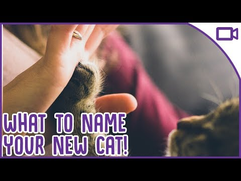 Best Cat Names 2019 What To Name Your Cat!