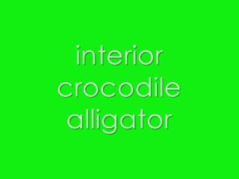 interior crocodile alligator. (FULL SONG). - YouTube