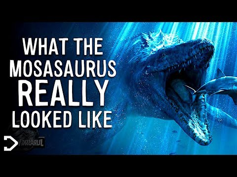 What Did The Mosasaurus REALLY Look Like?