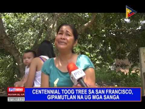 CENTENNIAL TOOG TREE GIPUTLAN NA OG MGA SANGA