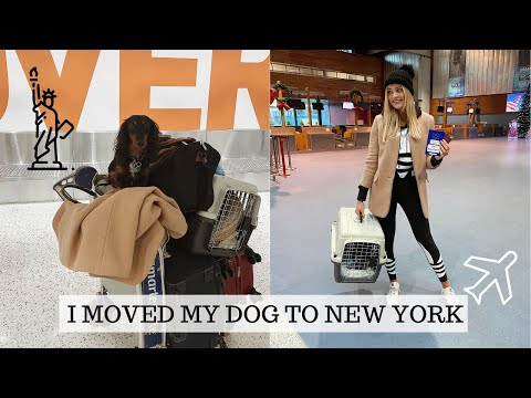 I MOVED MY DOG TO NEW YORK   VLOG   Louise Cooney