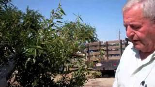 Marchini Farms - Almonds
