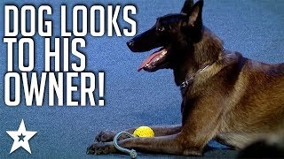Smartest Dog on Romania