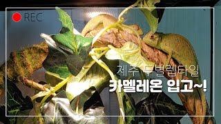 카멜레온 세팅~!(feat.두둥!)