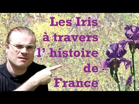 Les Iris à travers l'histoire de France