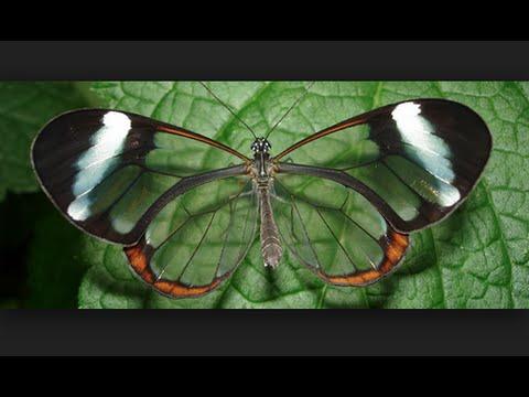 Cosas raras curiosas e increibles de las mariposas youtube for Cosas insolitas e increibles
