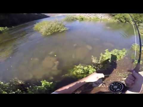Fly Fishing Elk River TN Rainbow Trout
