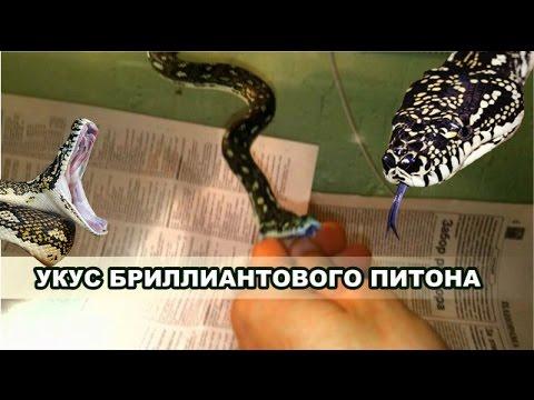 Объявления о продаже змей, питонов и игуан раздела рептилии в екатеринбурге на avito. Цена не указана. Компания. М. Тигровый питон. 10 000 ₽.