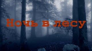 Истории на ночь: Ночь в лесу