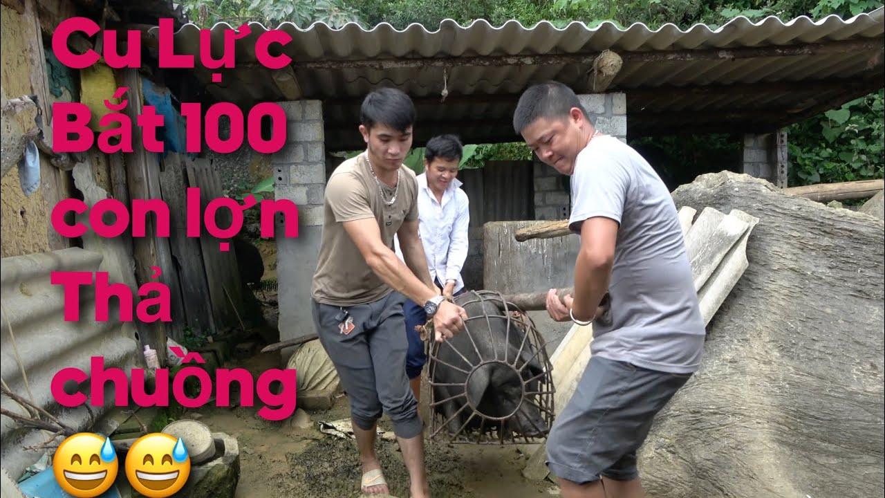 Download Cu Lực Cùng anh em Bắt Lợn Cho Lợn Vào Nhà Mới