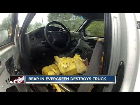 bear breaks into retired pittsburgh teacher 39 s car dest doovi. Black Bedroom Furniture Sets. Home Design Ideas