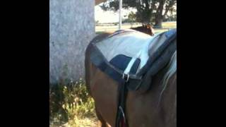Riding a horse bareback verses a saddle - Pros and Cons - Rick Gore Horsemanship
