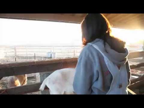 Tierra Mia Organics - Raw Goat Milk Skin Therapy