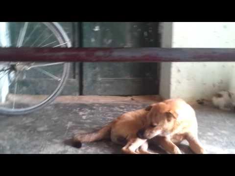 chó với mèo căn nhau