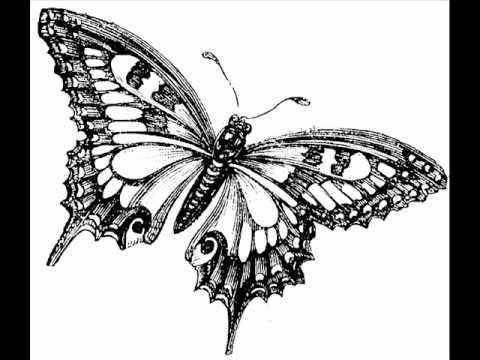 Butterfly- Jason Mraz (studio version)