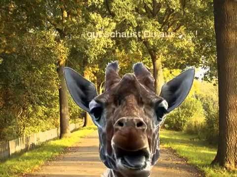 Die Lustige Giraffe