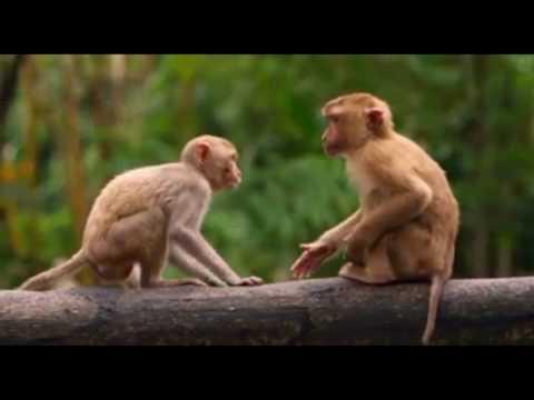 Curiosos, tiernos y graciosos monos/chimpacés PARTE 1  - DiferenteMenteTv
