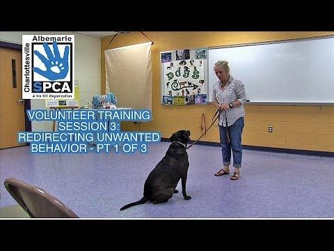 Volunteer Training  - Session 3 -  Redirecting Unwanted Behavior   Pt 1 of 3