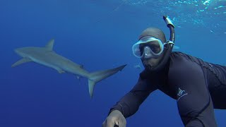 Gopro: Open Water Swimming With Sharks
