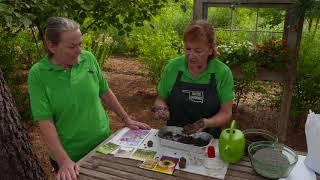 Garden Activities for Kids