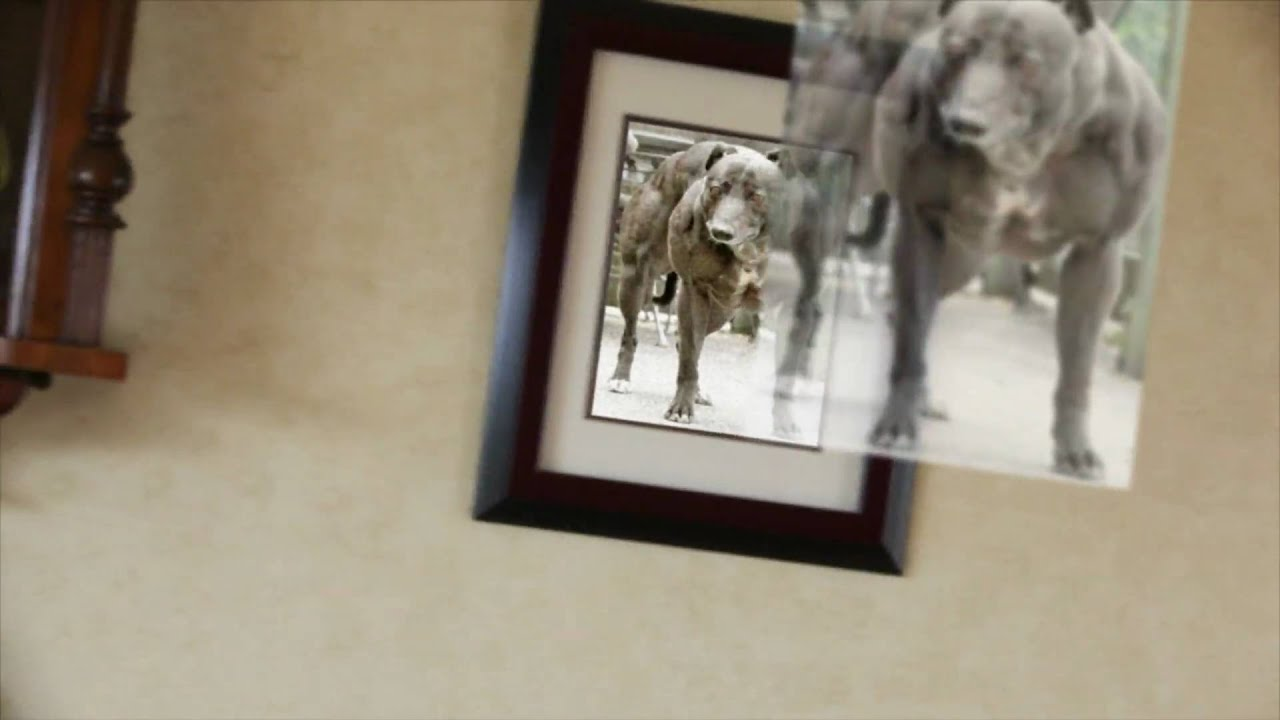 My dog and holographic picture frame youtube my dog and holographic picture frame jeuxipadfo Images
