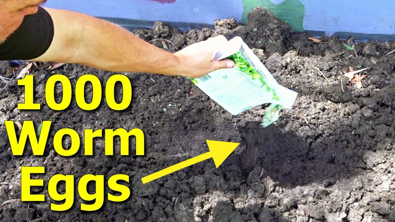 What Happens When You Add WORM EGGS to a COW DUNG Pile?