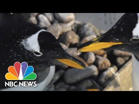 Can Animals Be Gay? | 30 STK | NBC News