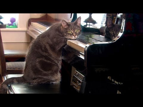 Why Do Cats Purr? | Nora | Extraordinary Animals | BBC Earth