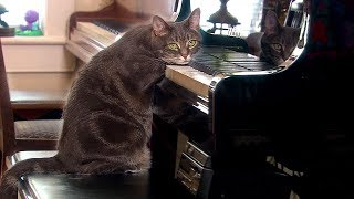 Why Do Cats Purr? | Nora | Extraordinary Animals | BBC Earth
