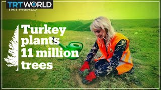 Turkey breaks world tree-planting record