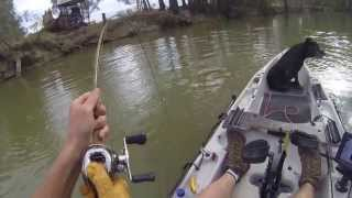 1 Metre Murray Cod in a Hobie yak