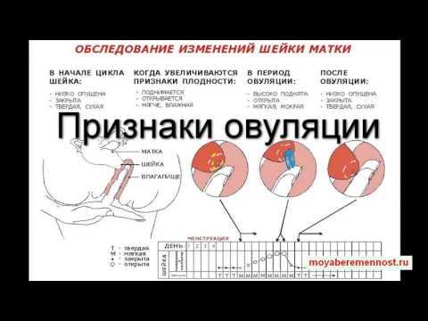 Боль внизу живота справа - основные причины