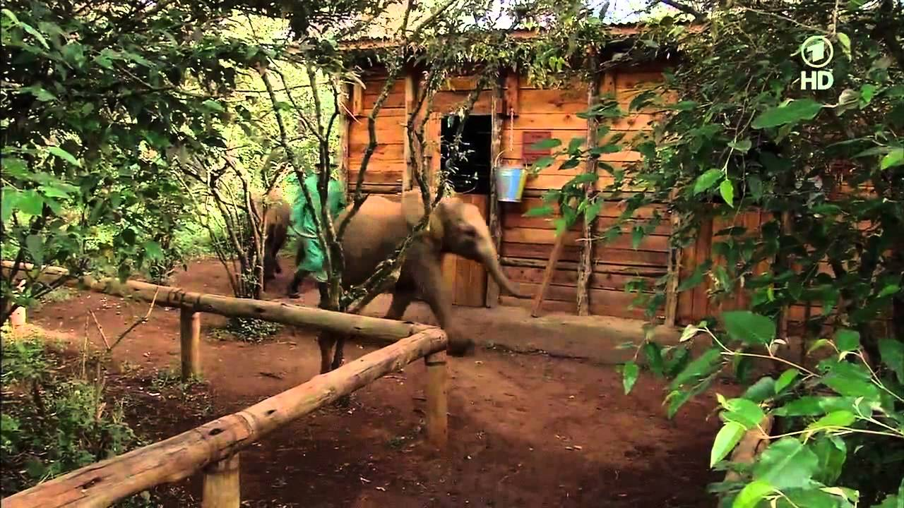 Elefanten Doku