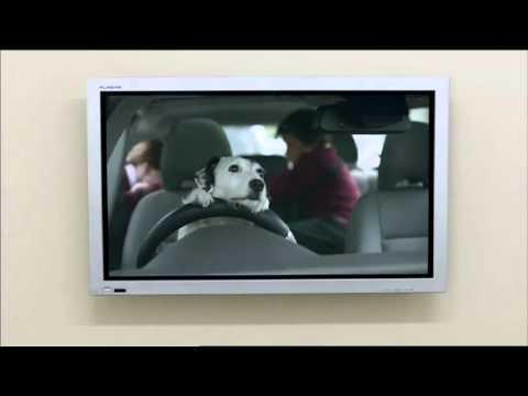 el-perro-vendedor