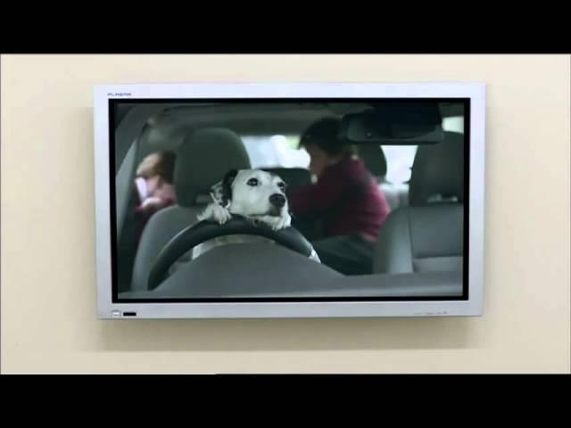 Imaginación y empatía con el Perro Vendedor