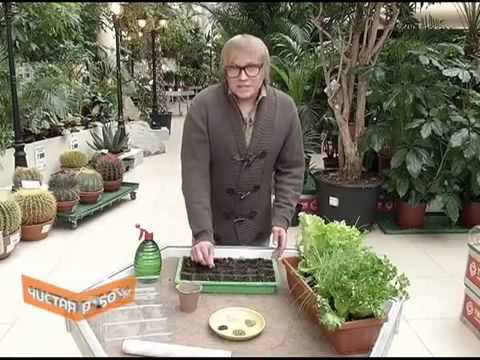 Сад и огород в домашних условиях