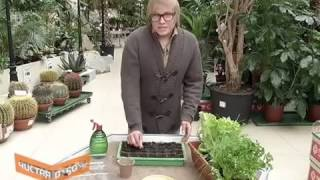 видео Комнатное земледелие или огород на подоконнике