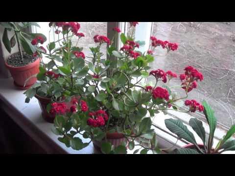 Ролик Красивые цветы в горшке