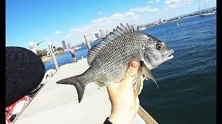 Random Land Based Gold Coast fishing