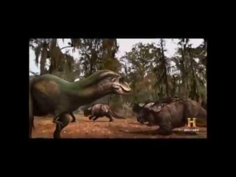 Albertosaurus vs Pachyrhinosaurus!