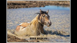Wild Horse Adventure - Workshop and Photo Tours
