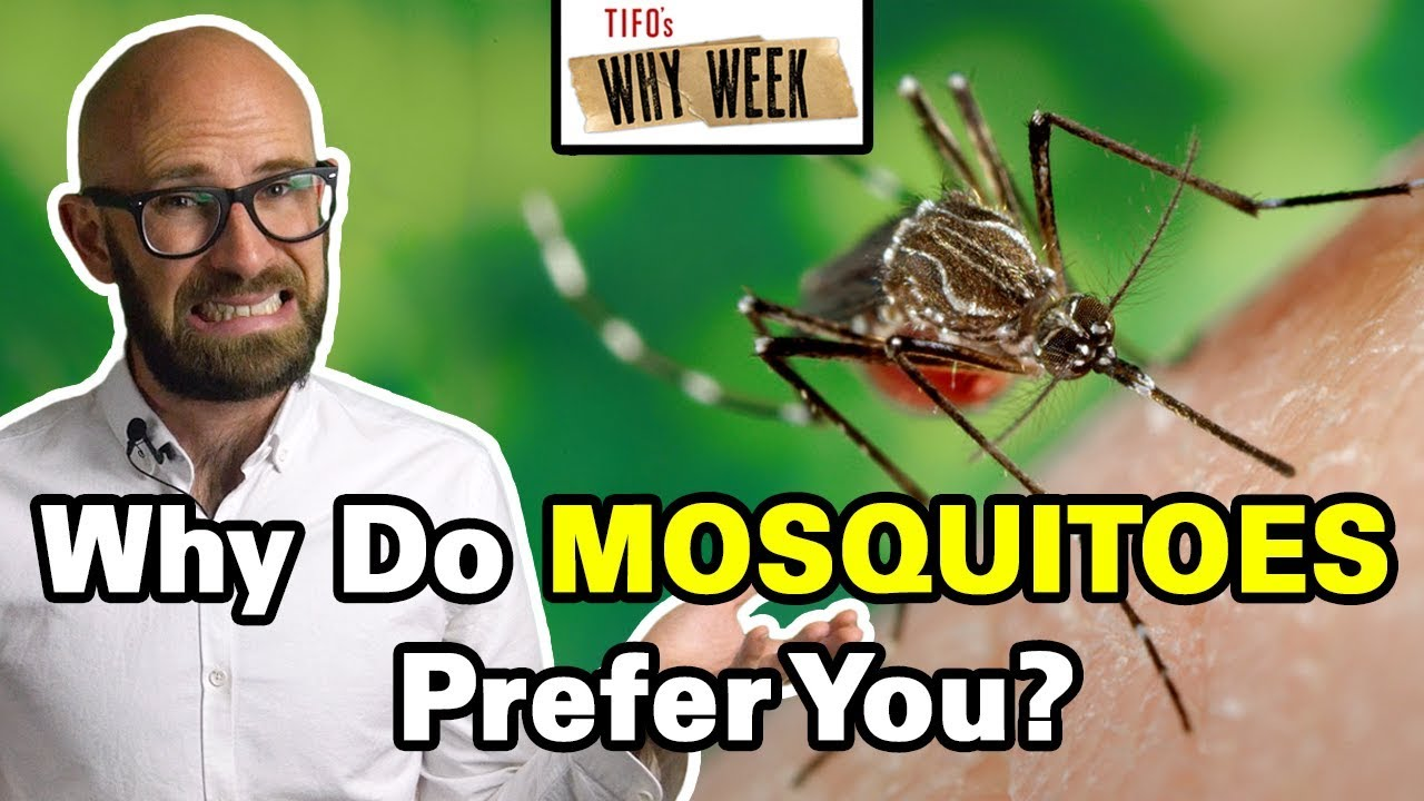 why-week-why-are-mosquitoes-more-attracted-to-some-people-than-others
