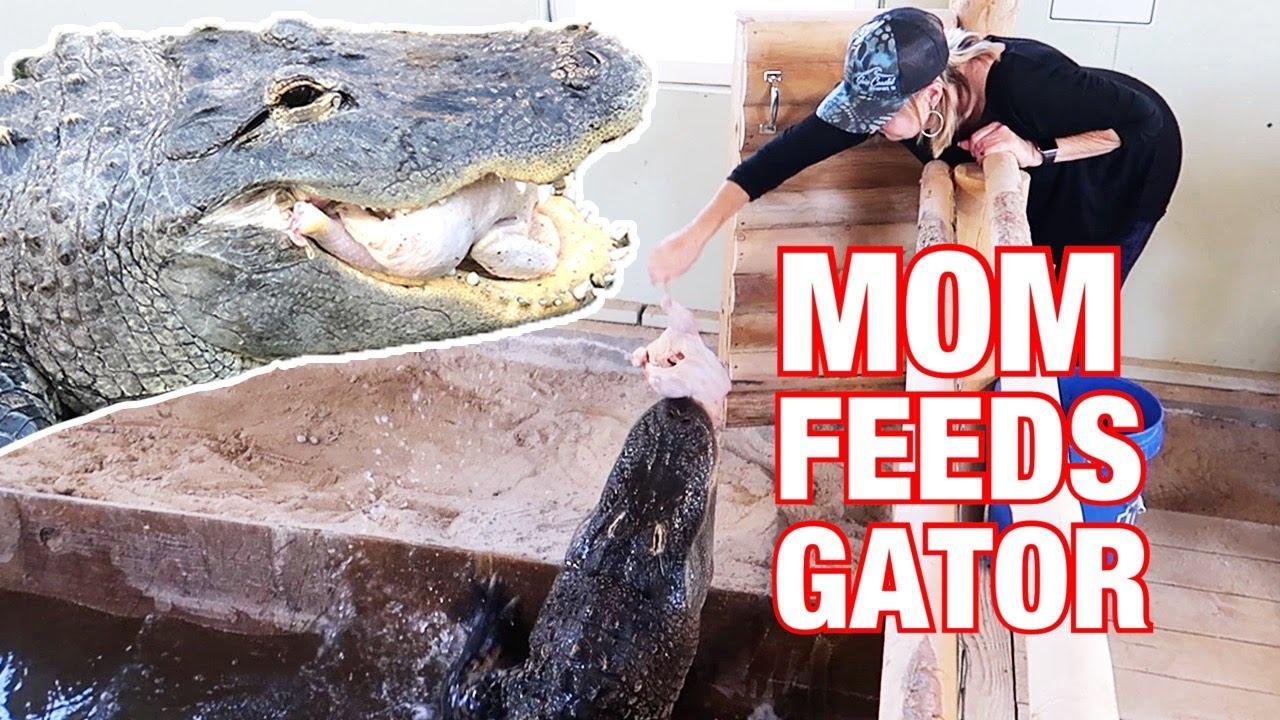Mom Feeds 10 foot Alligator!!!