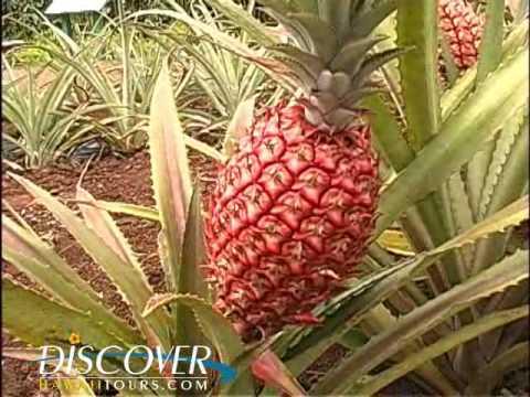 Pineapple Tour Oahu