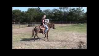 Nestle 8 Year Old Pony FOR SALE