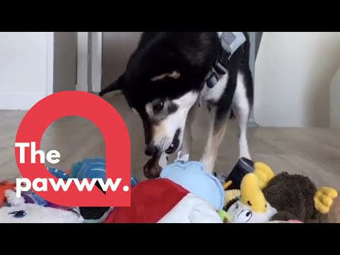 Adorable Dog And His Owner Recreate Classic Toy Story Scene | SWNS