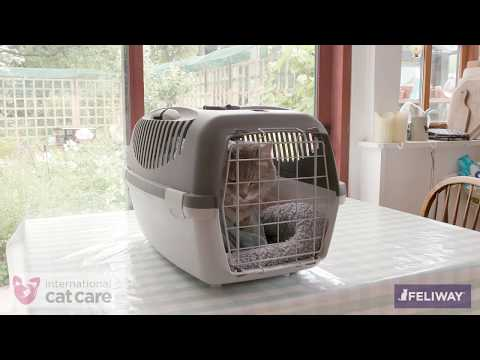 Putting your cat in a cat carrier