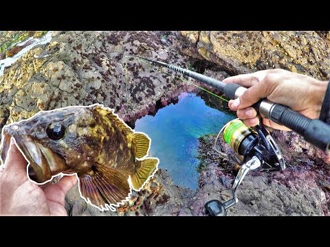 Saltwater Tiny Pool and Pocket Fishing Catch and Cook at KING LOW TIDE