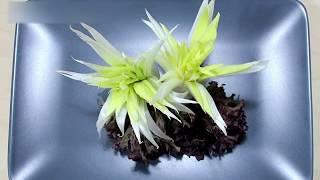 #003 Лотос из лука-порея цветок кулинария, украшение, цветок, лепка, паприка, резьба